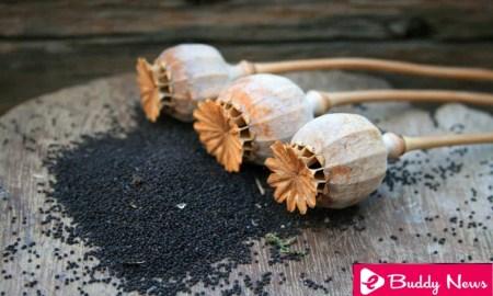 Health Benefits Of Poppy Seeds To Be Known ebuddynews