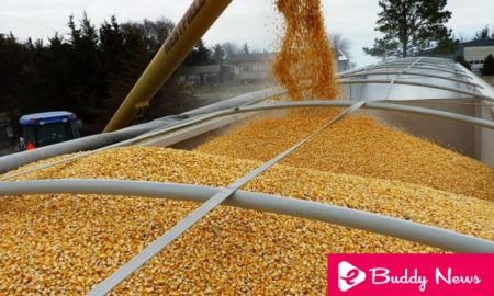Argentine Replaces The Us As A Supplier Of Grains From Mexico - eBuddy News