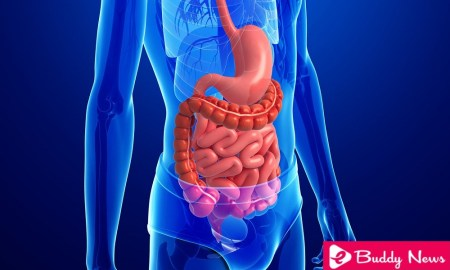 Four Most Common Cancers From Digestive System - eBuddynews