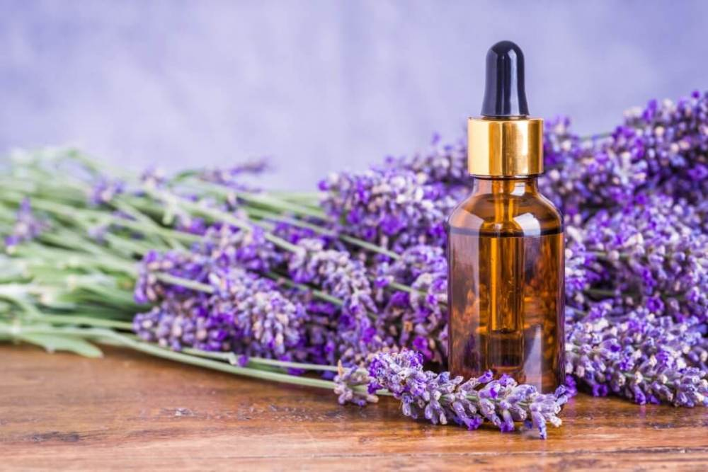Lavender Oil - eBuddy News