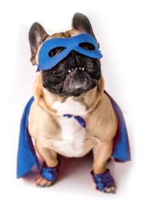 ECAD Support Hero Dog