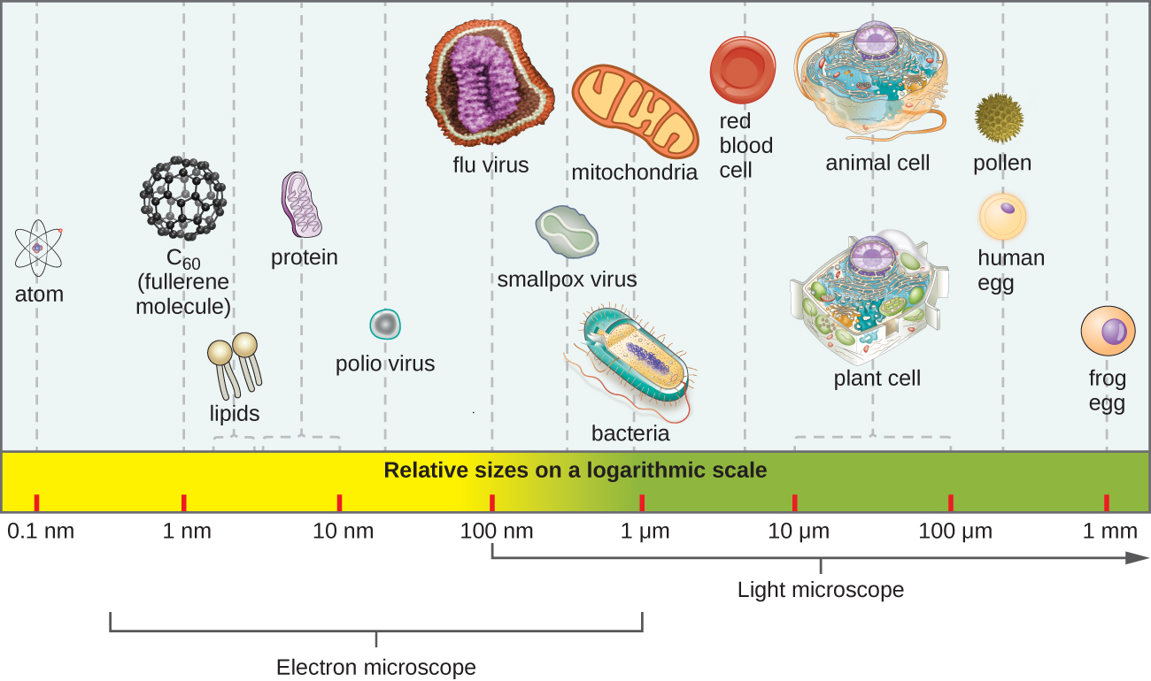 1 3 Types Of Microorganisms Microbiology Canadian Edition