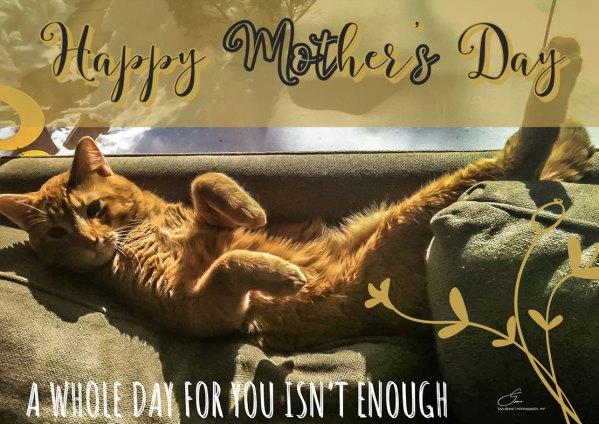 Mothers-Day-Kitty-eCard---Lisa-Drew-Photos-Minneapolis