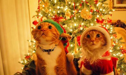 Preparazione al Natale: la prima settimana