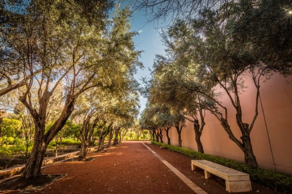 Cyber Park shaded by olive trees