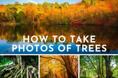 How to take photos of trees