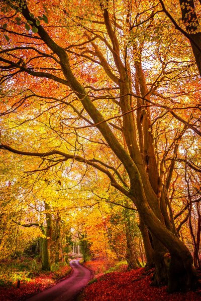 Time of year - how to take photos of trees