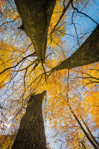 look up - how to take photos of trees
