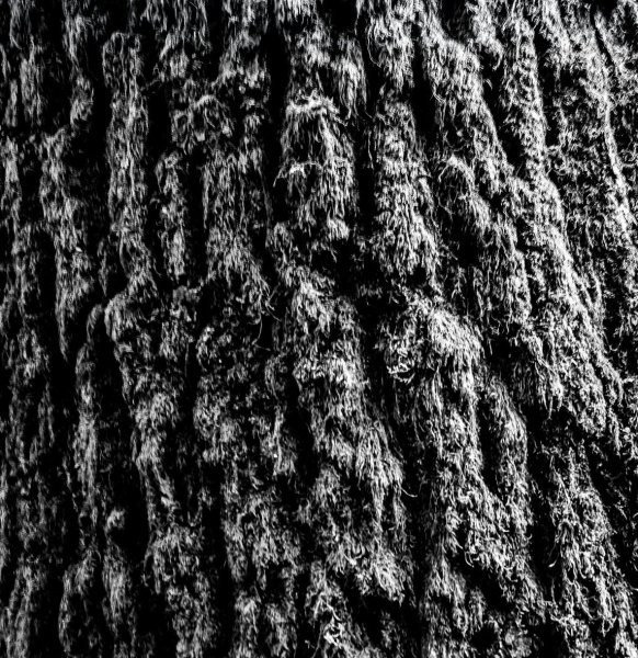 monochrome - how to take photos of trees