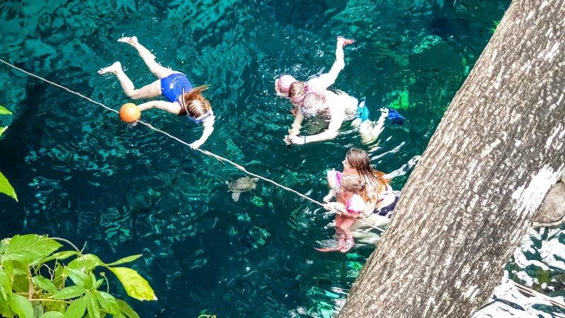 Turtle - Gran Cenote Tulum
