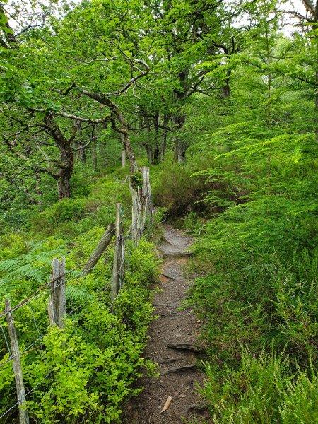 Conwy Falls walking track