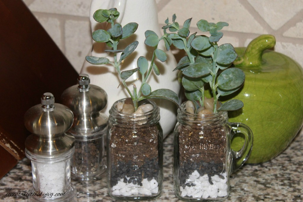 salt and pepper shaker terrarium with succulent plants for small places