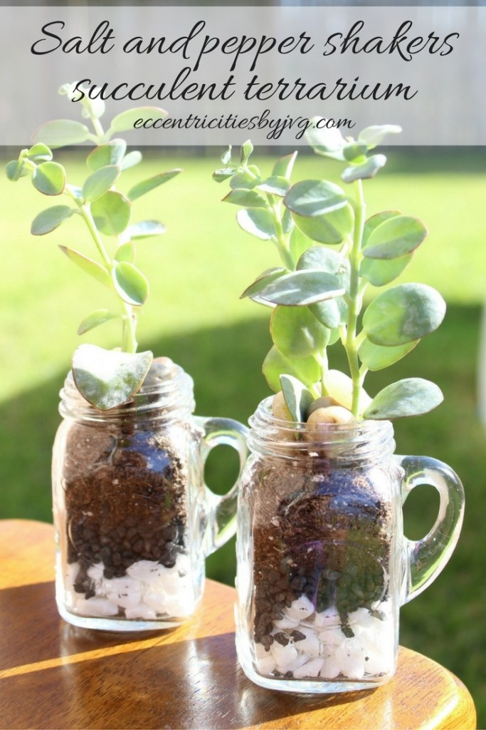 Salt and Pepper shakers turned succulent terrarium