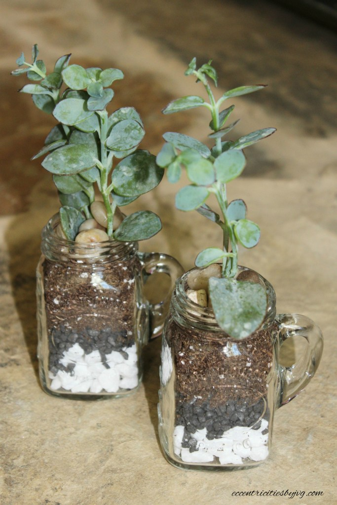Salt and pepper shakers terrarium for small spaces