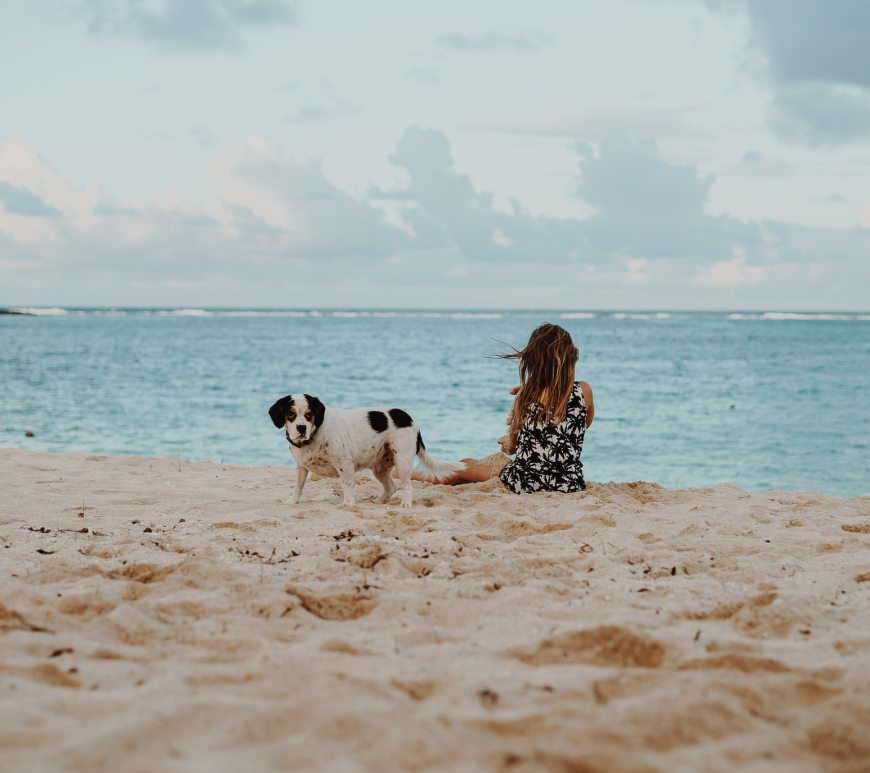 dog and little girl at beach