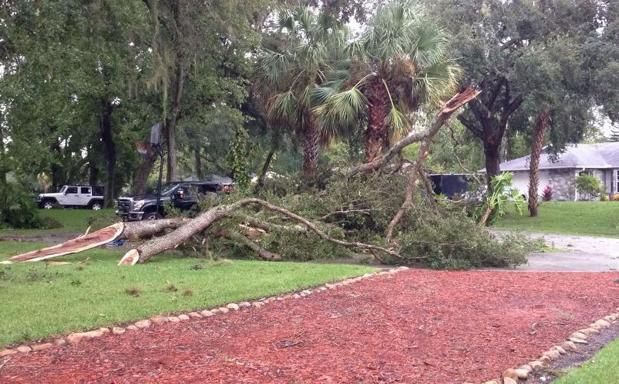 fallen tree branch after storm
