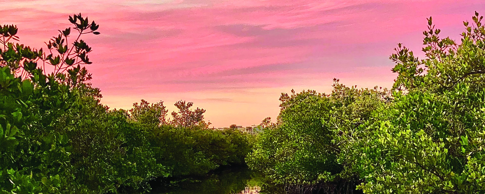 pink sunset over water and green plants