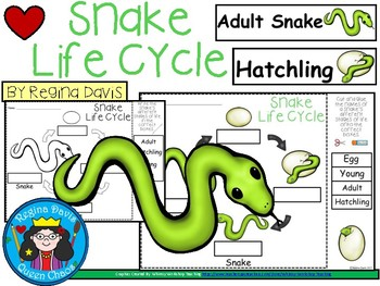 Snake Life Cycle Worksheets Teaching Resources Tpt
