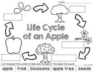 All About Apples! {Life Cycle, Apple Parts} by A is for