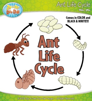 Ant Life Cycle Clipart Zip A Dee Doo Dah Designs By Zip A Dee Doo Dah Designs