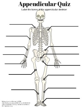 Appendicular Skeleton Labeling Quiz And KEY By Amazing