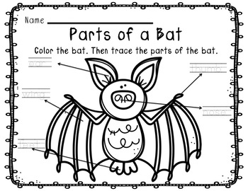 Bat Life Cycle Unit By The Learning Beezzz Teachers Pay Teachers