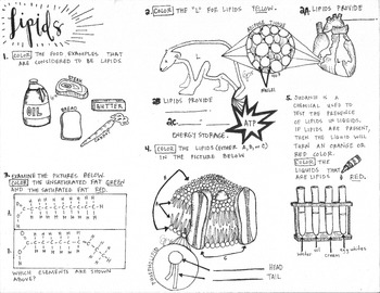 Lipids Coloring Pages