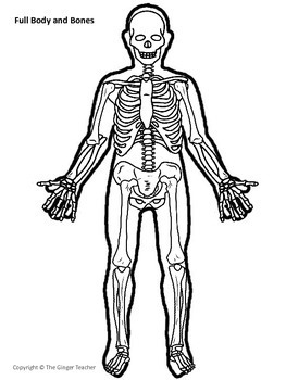 Build A Body Skeleton And Organs Anatomy Template