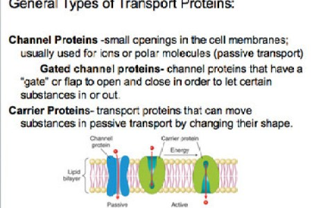 cell membrane transport proteins » Path Decorations Pictures | Full ...