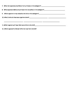 Cladograms Worksheet Using Common Ancestors And