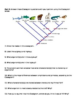 Cladograms Worksheet And Pr By Brianna Jenkins