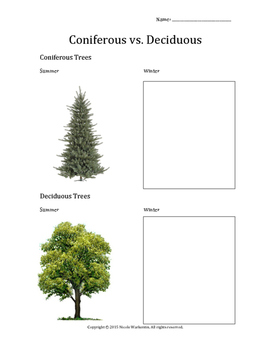 tree identification matching • using the bc tree posters • identify which photo matches the tree name • western hemlock Coniferous Vs Deciduous Trees By Nicole Warkentin Tpt