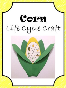 Corn Life Cycle Craft By Erin Thomson S Primary Printables Tpt