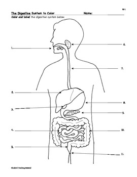 Digestion: Digestive System... by Bluebird Teaching ...