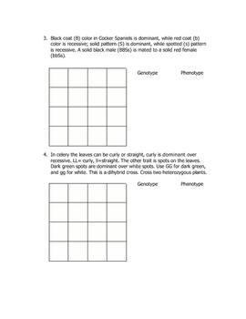 Dihybrid Cross Worksheet By Goby S Lessons