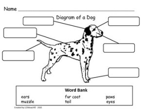 Dogs, Writing Activities, Graphic Organizers, Diagram by