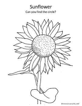 Fall Harvest Coloring Pages Apple Sunflower Pumpkin Leaves Strawberry