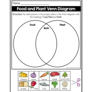 Food and Plant Venn Diagram Worksheet by The Kinder Kids   TpT