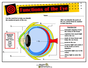 Functions and Anatomy of the Eye by Health EDventure   TpT