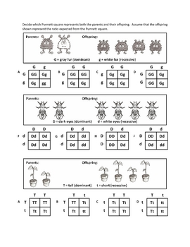 Genotypes And Punnett Squar By Haney Science