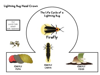 Spring Life Cycles Preschool 2 Lightning Bug Fire Fly By The Education Edge