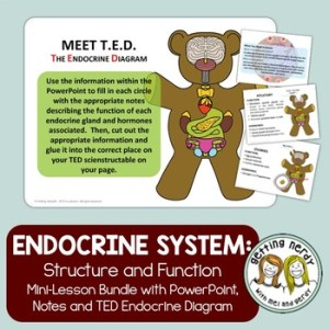 Endocrine System by Getting Nerdy with Mel and Gerdy   TpT