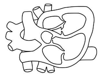 human heart coloring page # 7