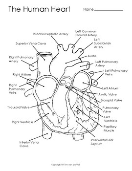 human heart coloring page # 55