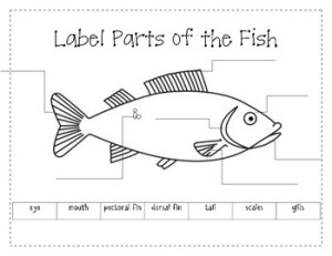 Label the Parts of a Fish by firstgradeannie | Teachers