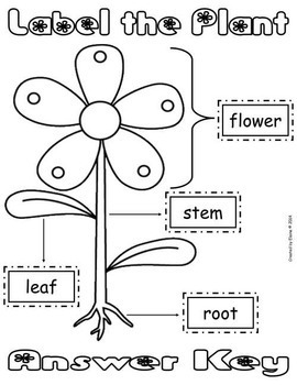 Label The Plant Cut Amp Paste Worksheet Freebie By The
