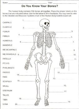 Label the bones  worksheet by Samuel Granger | Teachers