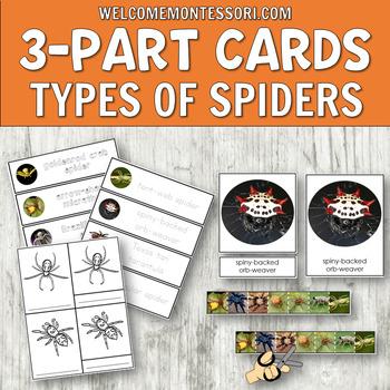 Montessori Types Of Spiders 3 Part Cards Tpt