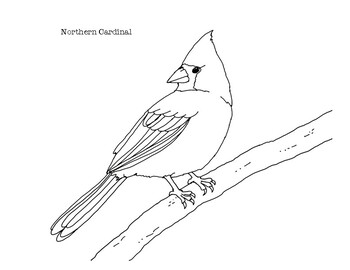 Northern Cardinal Coloring Page By Mama Draw It Tpt
