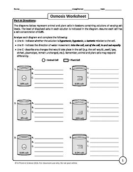 Worksheet Osmosis And Tonicity Answer Key